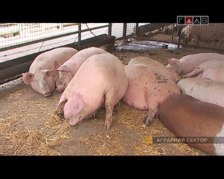 Нерентабельное животноводство