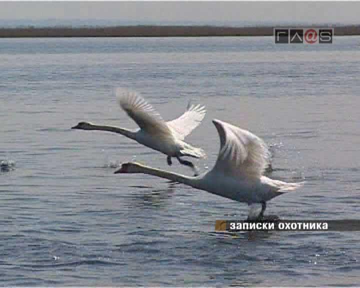Приднестровское охотничье хозяйство