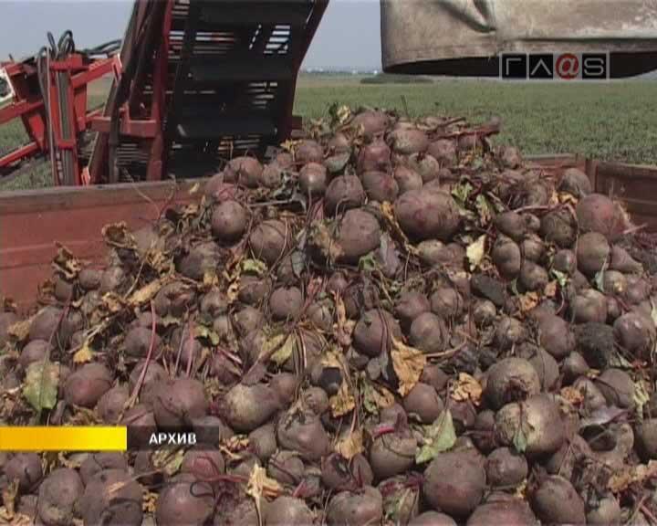 Овощи отечественного производства в этом году ранними не будут