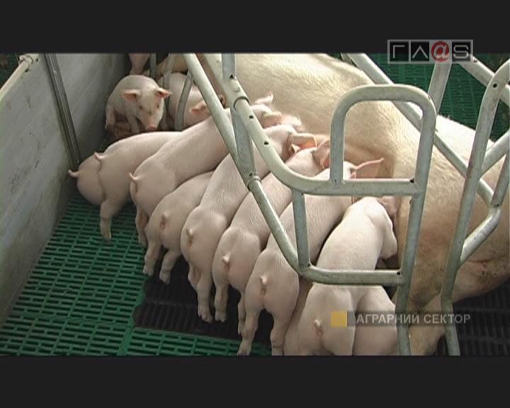Лирика и проза одесского животноводства