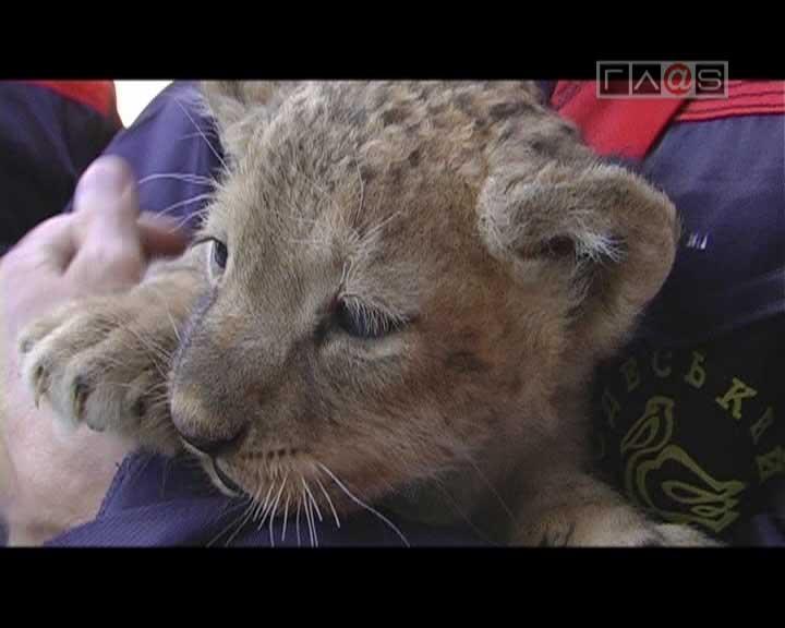 Жизнь в Одесском зоопарке идет полным ходом