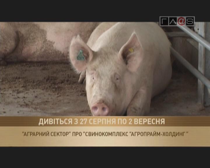 «Открытие свинокомплекса «Агропрайм-Холдинг».