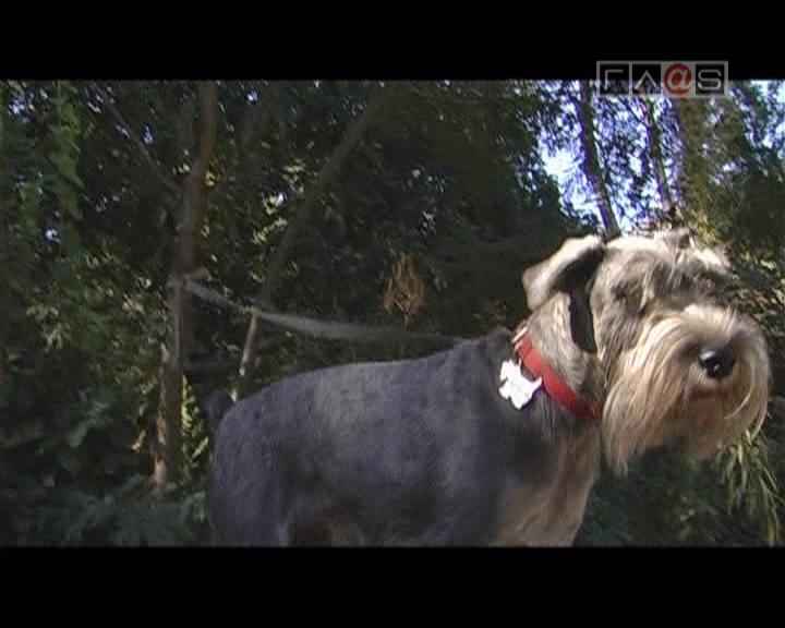 Соревнования собак в Одессе