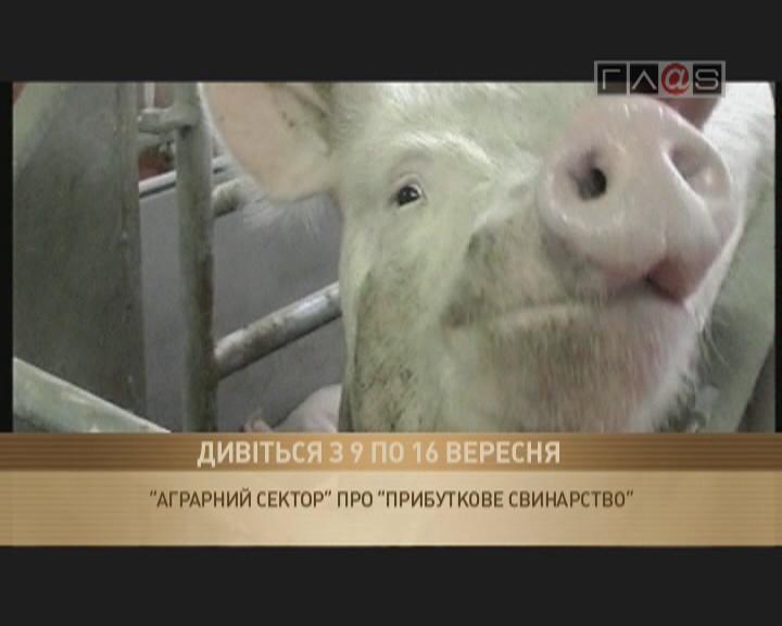 «Прибыльное свиноводство»