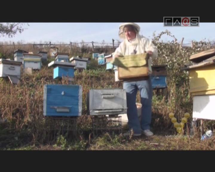Анонс «Заметки пчеловода»