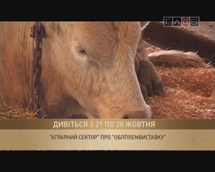 Анонс «XV Одесская облплемвыставка»
