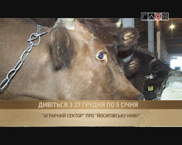 Анонс «Аграрный сектор» — «Йосиповска «Нива».