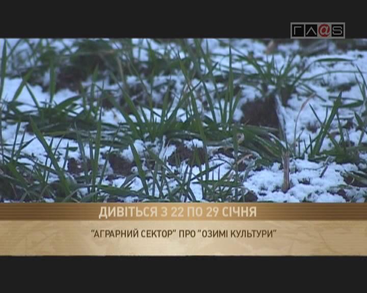 Анонс «Озимые 2012»