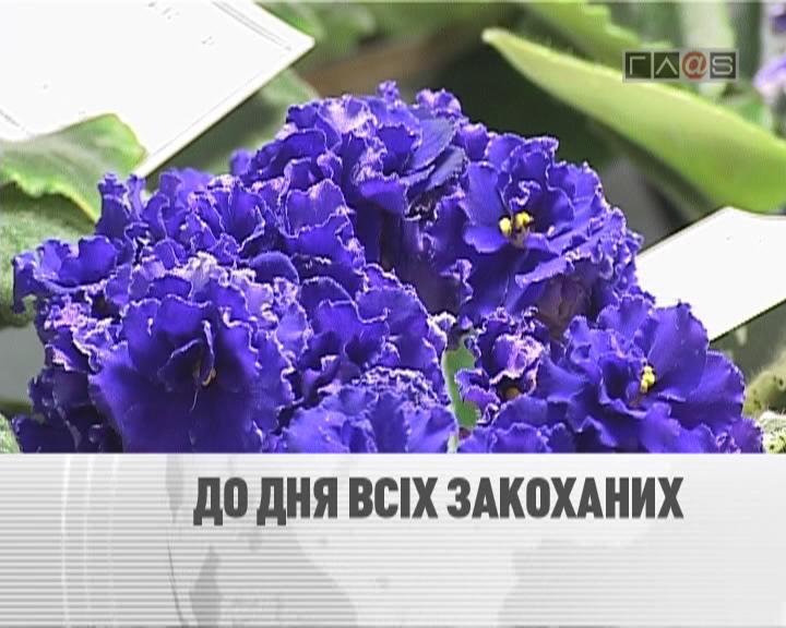 В Одессе «зацвели» фиалки.