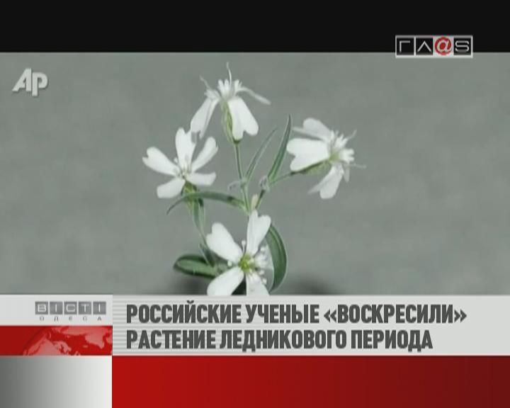 ФЛЕШ-НОВОСТИ за 23 февраля 2012