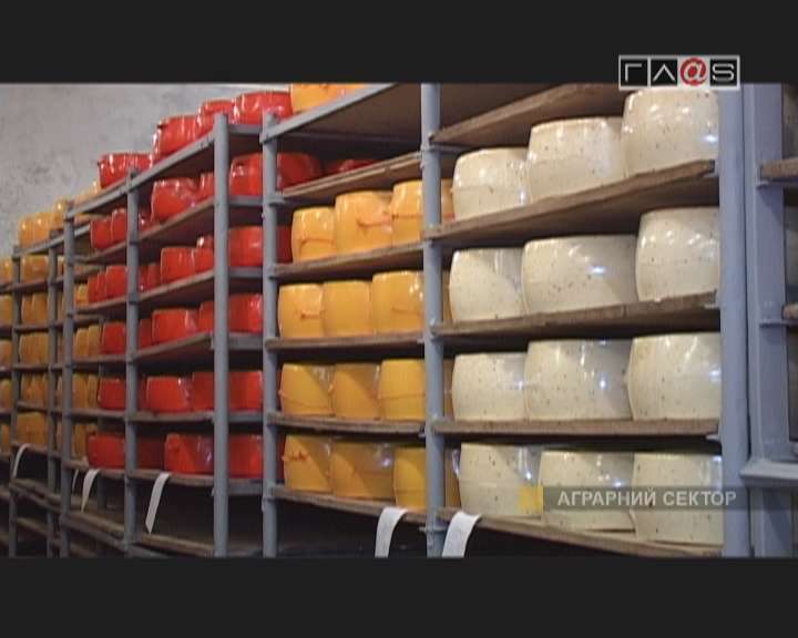 «Старокозачий сыр»