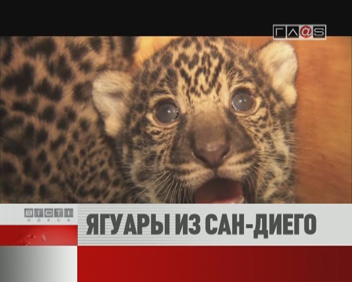 ФЛЕШ-НОВОСТИ за 18 мая 2012