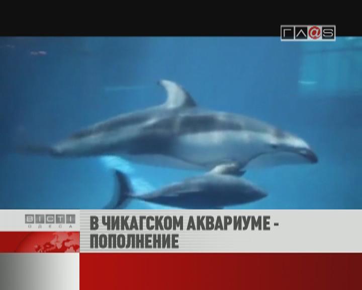 ФЛЕШ-НОВОСТИ за 13 июня 2012
