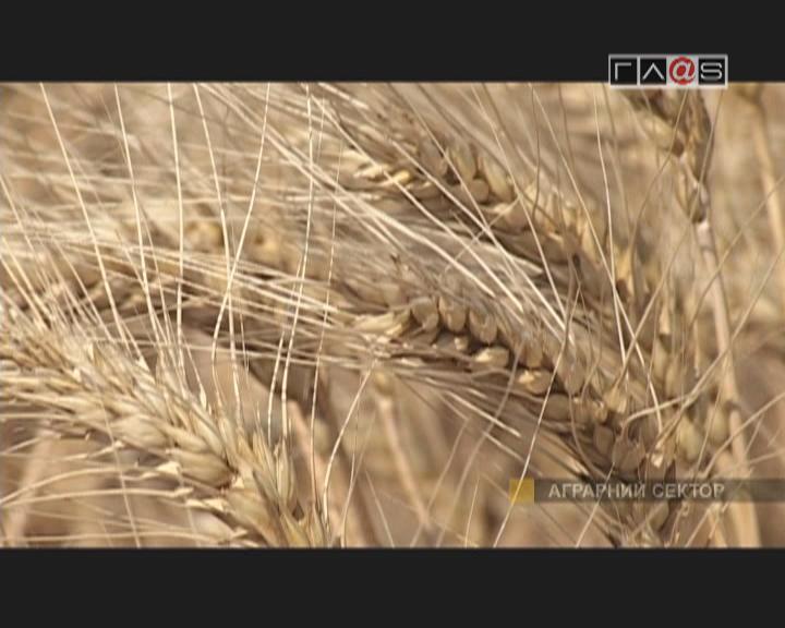 Семена от ГП ЄБ «Дачная»