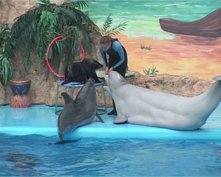 Летом в дельфинарий!