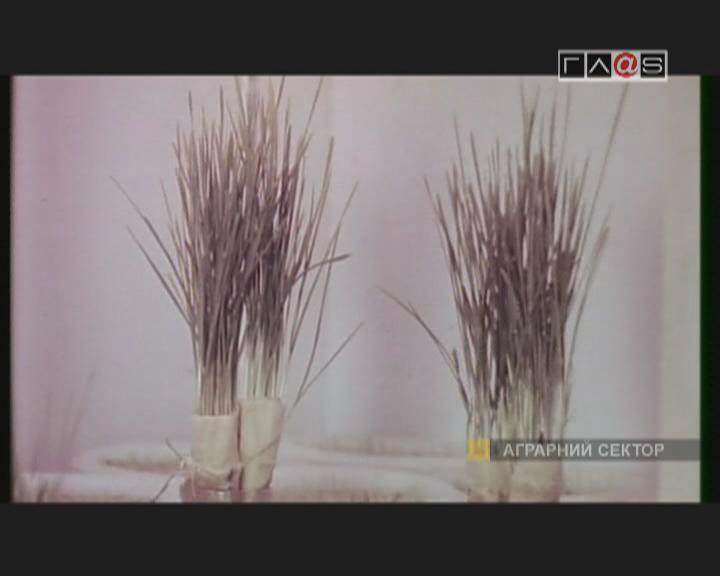 «К 100-летию Селекционно-генетического института» — VII серия