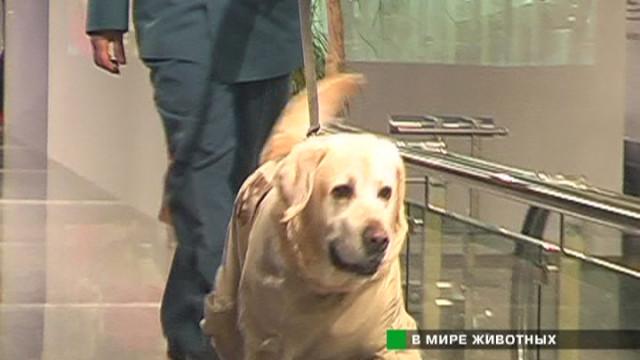 «Собака года — 2005»