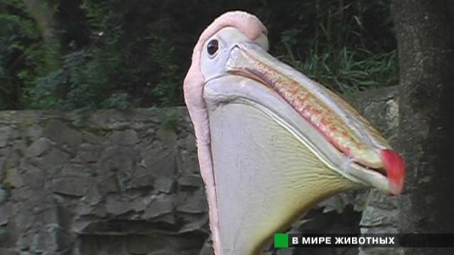 Крымский Зоопарк