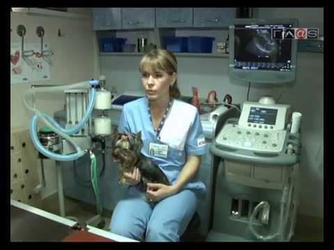 Просто собака // Болезни сердца – симптомы, лечение, профилактика