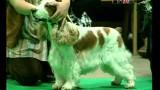 Просто собака // Померанский шпиц
