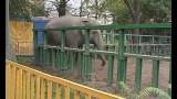Одесский зоопарк лучший в Украине