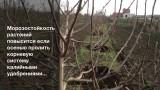 Защита растений от обледенения и морозов