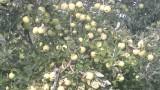 Почва в органическом саду