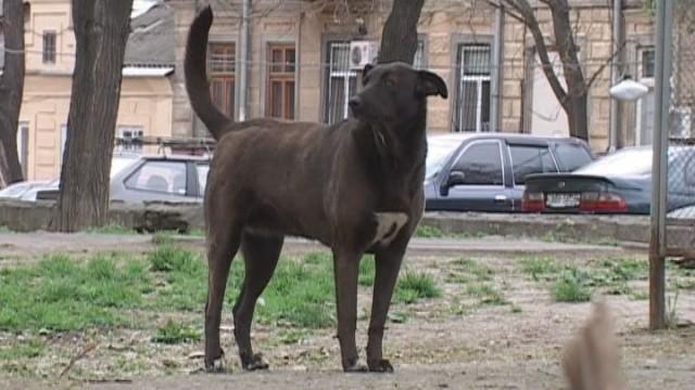 Программа защиты животных от жестокого обращения
