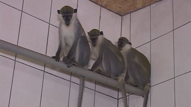 Одесский зоопарк к зиме готов