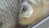 Какие реформы нужны в рыбной отрасли?
