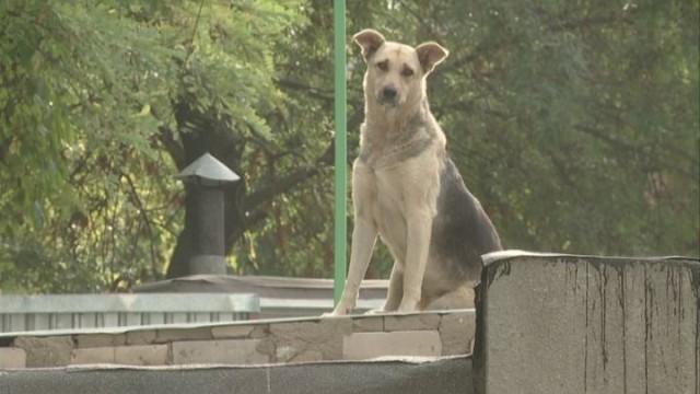 Живодеры. Убийство дворовых собак