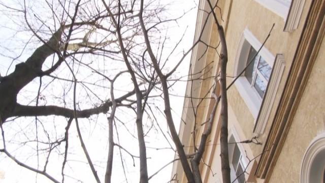 На Садовой появилось 7 деревьев липы