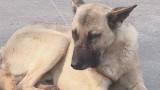 Число бездомных животных в Одессе уменьшилось в 2 раза