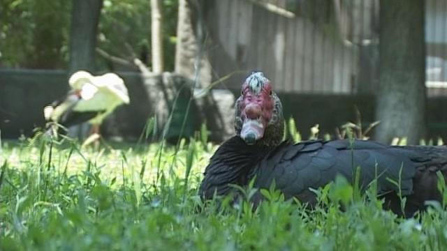 Одесский зоопарк: программа опекунства над животными