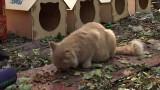 Домики для бездомных котов