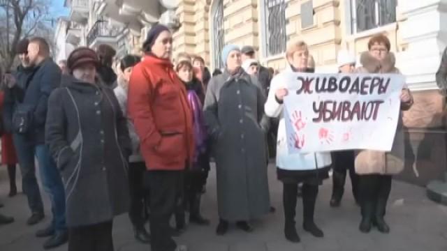 Зоозащитники бьют в набат: в Одессу приехали догхантеры