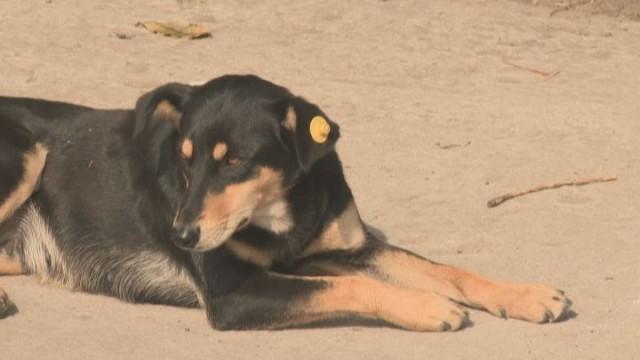 Бездомные животные: ситуация в Одессе