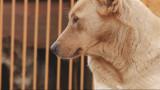 Приют Ковчег: Помощь бездомным животным