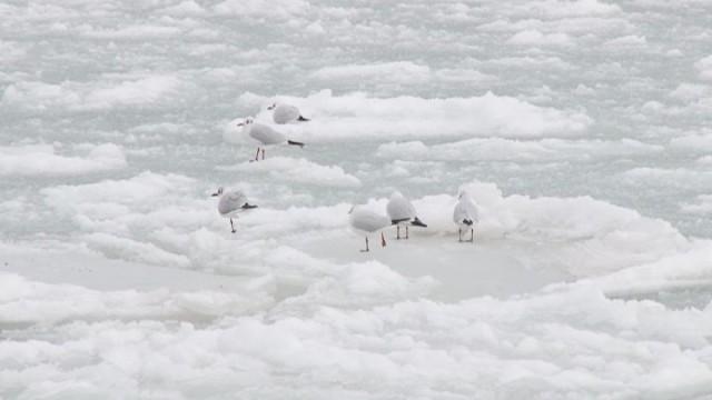 Зимние морозы: помощь чайкам