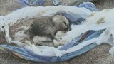 Бесчеловечное уничтожение бездомных котов