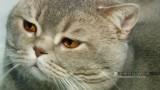 Выставка кошек в Одессе на морвокзале