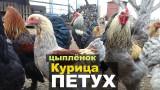 16 советов по выращиванию птицы / Жизнь в деревне