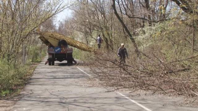 На Трассе здоровья проводят санитарную подрезку деревьев