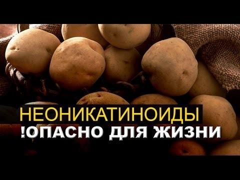 Молодая картошка ОПАСНА ДЛЯ ЖИЗНИ, если…