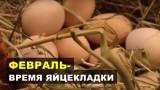 Февраль. Время активной яйцекладки