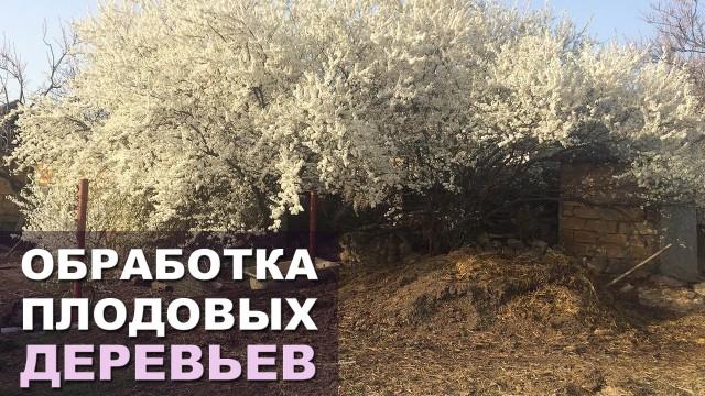 Обработка плодовых деревьев весной. Профилактика болезней