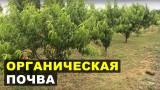 Почва в органическом фруктовом саду