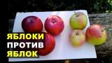 Сравниваем мои яблоки и  яблоки с базара