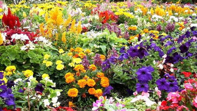 Чтобы сад выглядел красиво, нужно соблюдать несколько очень важных правил