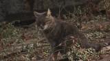 Женщина-кошка: фотовыставка про зоозащитников и их подопечных